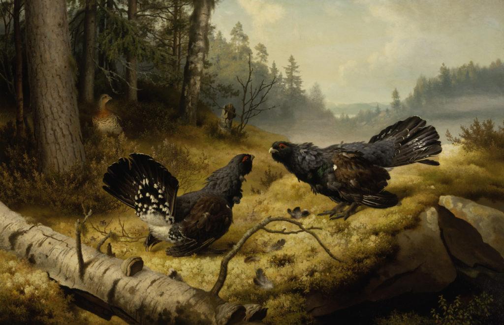 Ferdinand von Wright: Taistelevat metsot (1886). Kansallisgalleria / Ateneumin taidemuseo. Kuva: Kansallisgalleria / Yehia Eweis