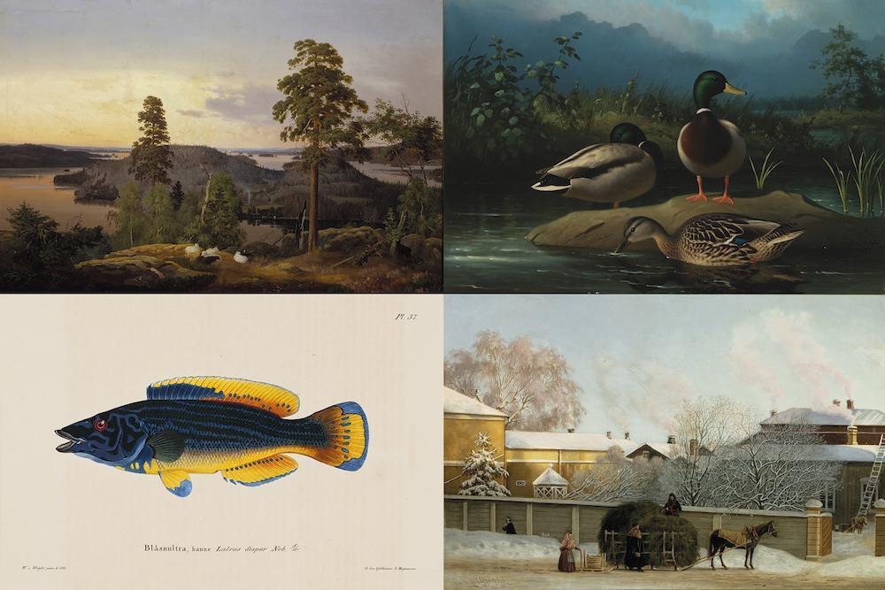 Ferdinand von Wright: Näköala Haminalahdelta (1853) | Ferdinand von Wright: Sinisorsia (1874) | Wilhelm von Wright: Sinihuulikala, koiras (1836–1857) | Magnus von Wright: Annankatu kylmänä talviaamuna (1868)