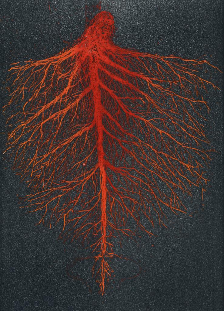 Taiteilijan tulkinta verijuuri-kasvista. Väreissä harmaata ja punaista.